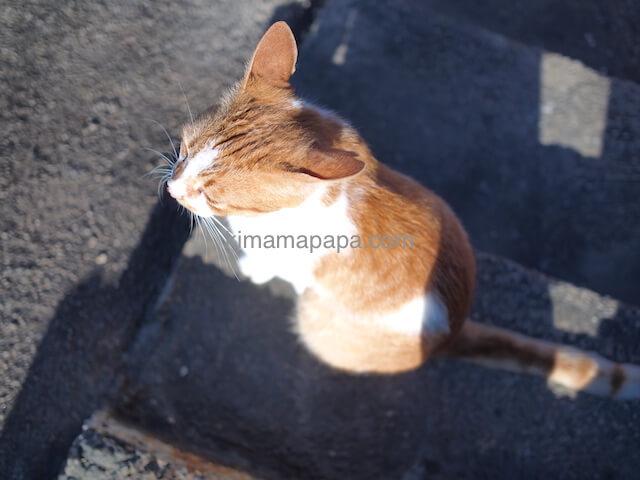 ブルーグロットの猫