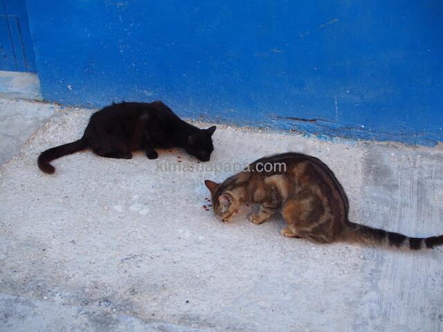 ブルーグロットの猫達