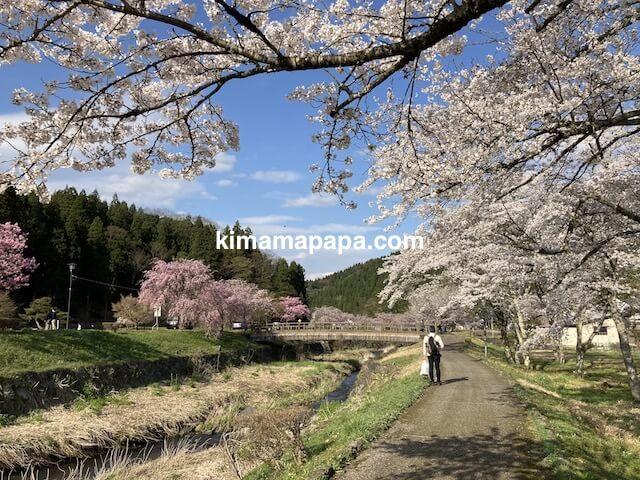 春の朝倉氏遺跡、一乗谷川