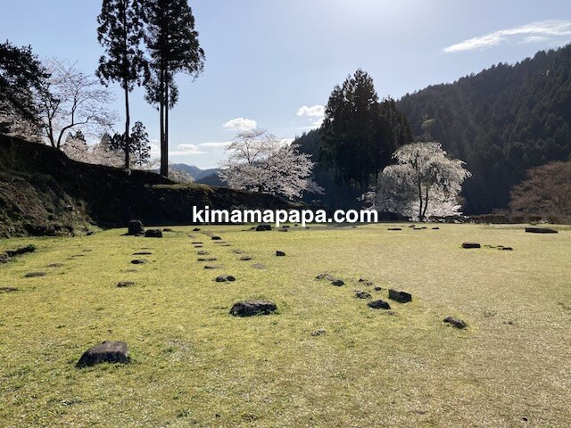 春の朝倉氏遺跡、物見台中の御殿跡