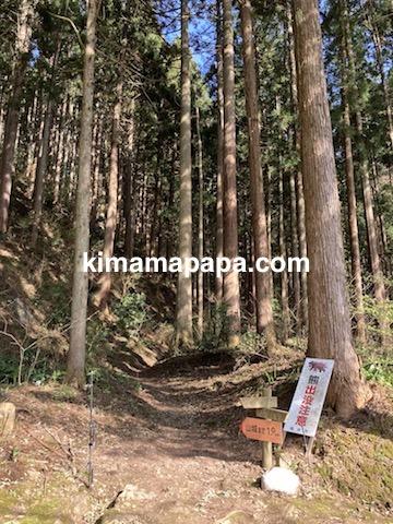 春の朝倉氏遺跡、山城への小道