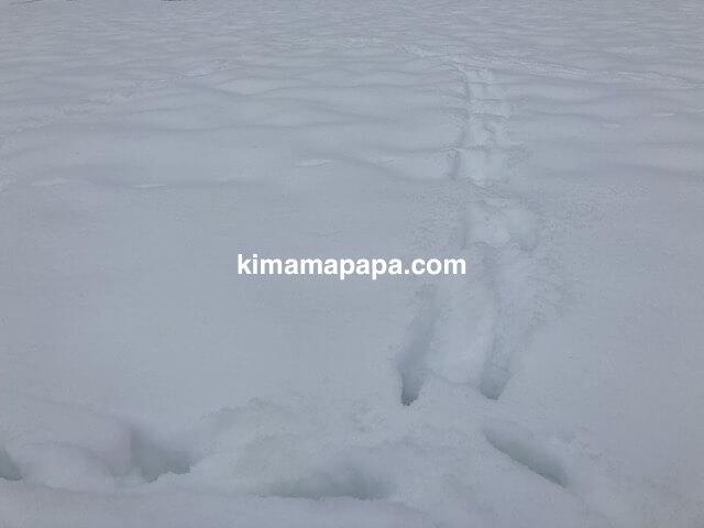 冬の朝倉氏遺跡、動物の足跡