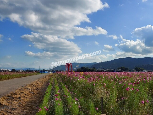 福井市、宮ノ下コスモス広苑のフォトスポット