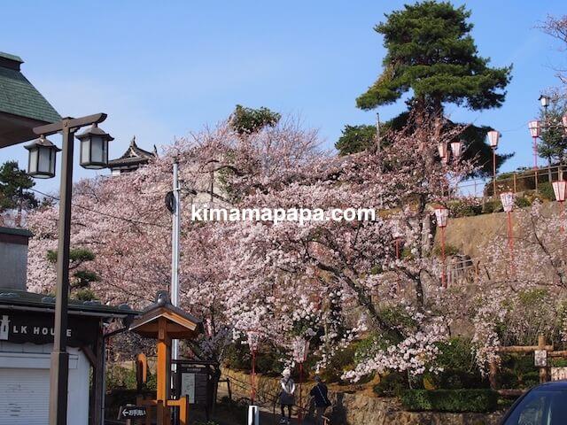 桜の季節、丸岡城の駐車場