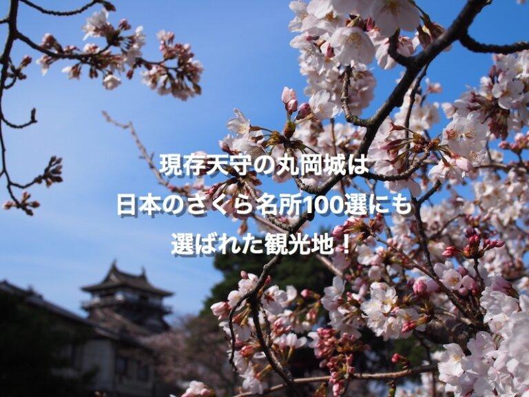 桜の季節、広場から見た丸岡城