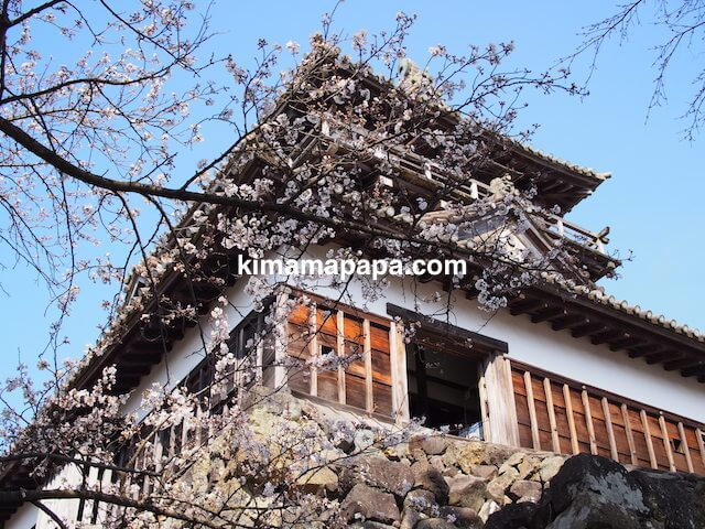 桜の季節、丸岡城の入り口