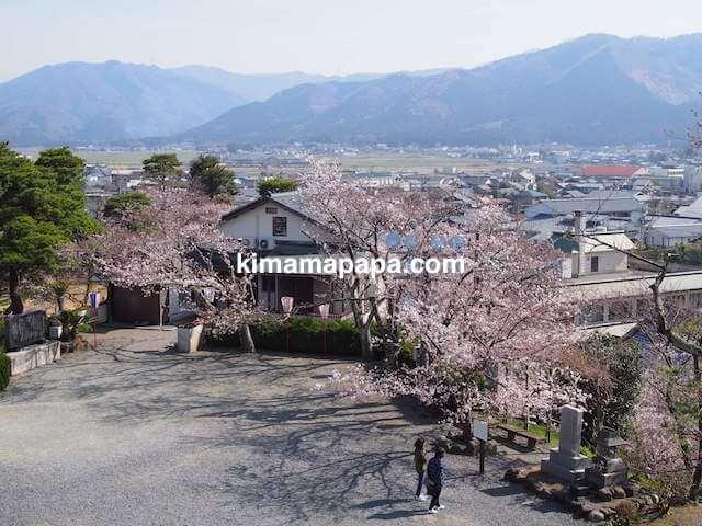 桜の季節、丸岡城入り口から見た広場