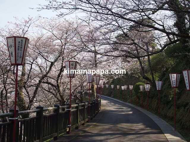 桜の季節、丸岡城の北側道路