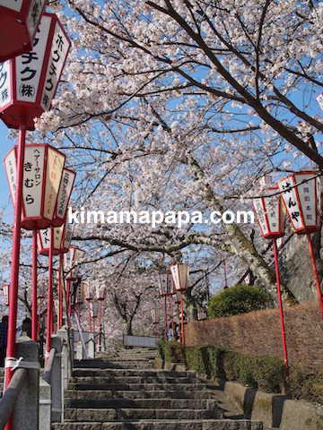 桜の季節、丸岡城の東側登り口