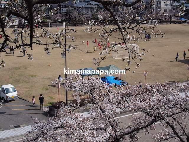 桜の季節、丸岡城広場から見たふれあい広場