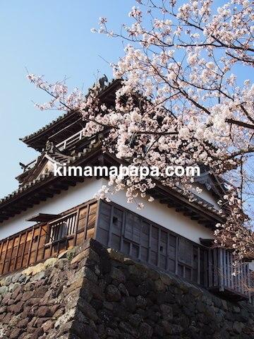 桜の季節、丸岡城の北東角