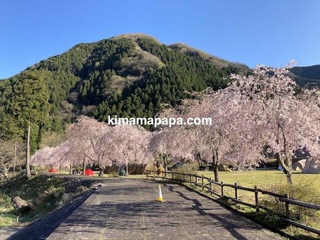 丸岡町竹田、竹田の里しだれ桜キャンプ場