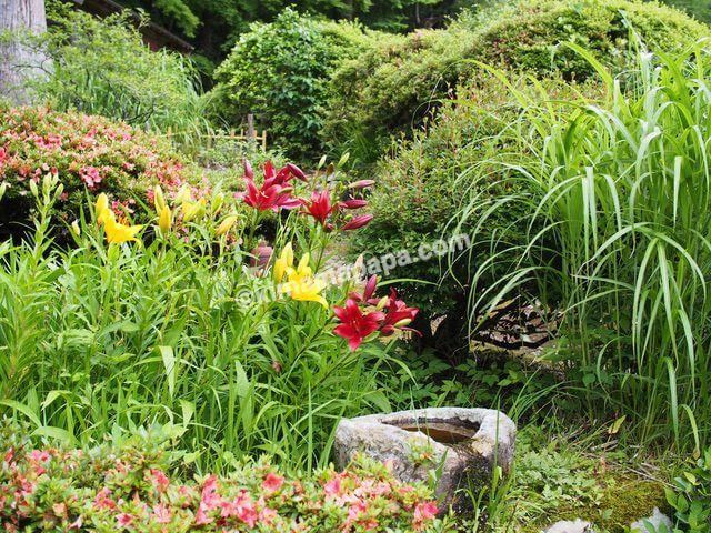 福井県丸岡町、千古の家のお花