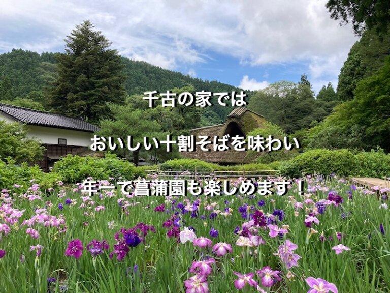 福井県丸岡町、千古の家の菖蒲