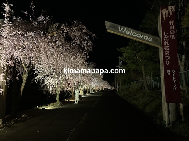 丸岡町竹田、夜のたけくらべしだれ桜