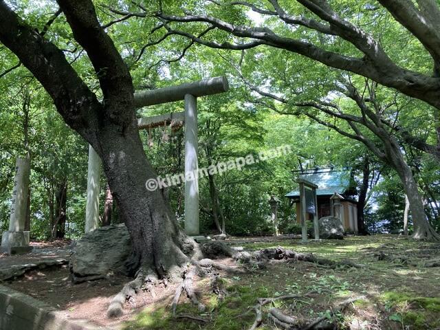 福井県三国町、三国神社の富理姫宮