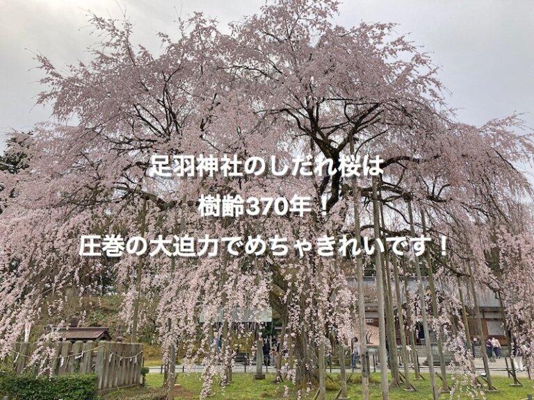 福井市、足羽山神社のしだれ桜