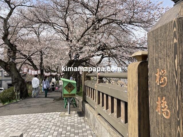 福井市、足羽川の桜橋