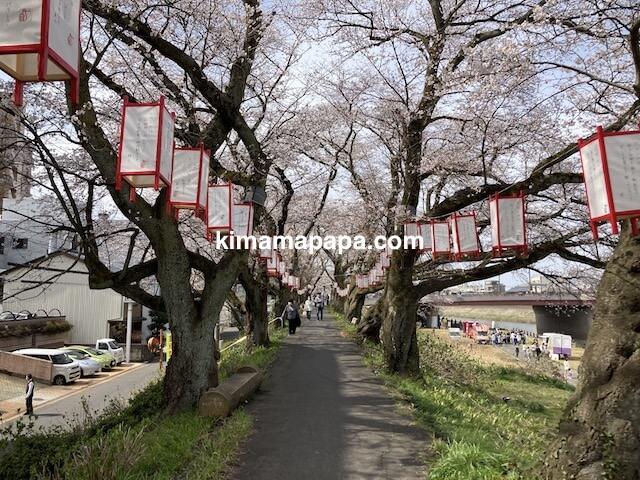 福井市、足羽川桜並木(桜橋〜九十九橋)