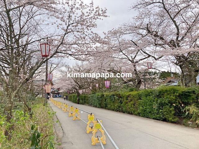 福井市、足羽山の桜
