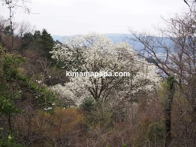 福井市、足羽山の白い花