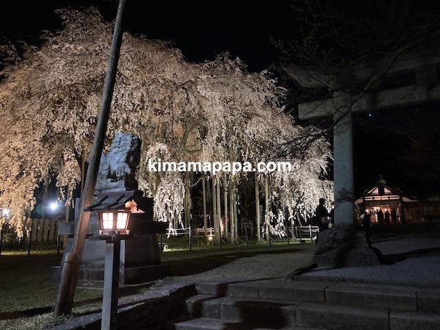 福井市、足羽神社のしだれ桜(夜桜)
