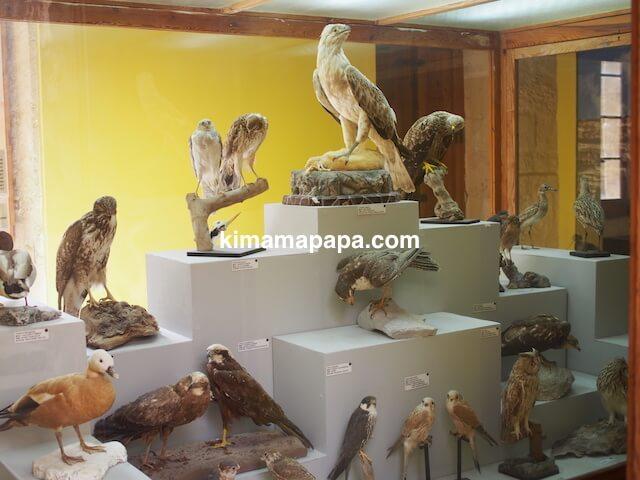 ゴゾ自然科学博物館、鳥類