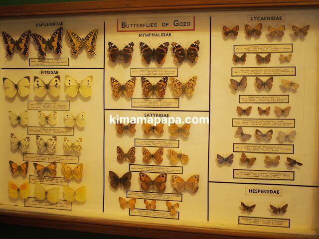 ゴゾ自然科学博物館、蝶