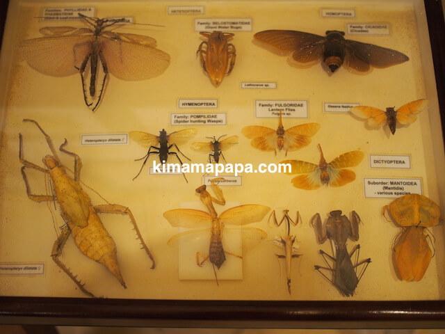 ゴゾ自然科学博物館、昆虫類