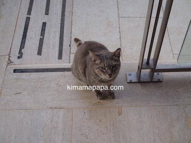 ゴゾ島、ダウンタウンホテルの猫
