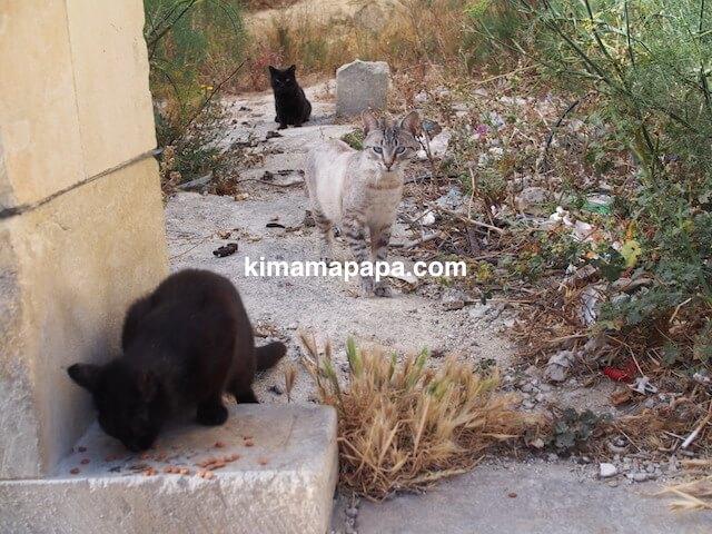 ゴゾ島、ダウンタウンホテル付近の猫達