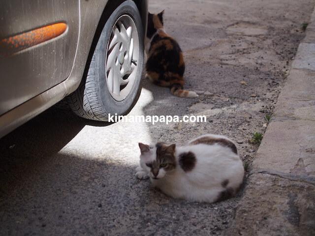 マルタ、セングレアの猫
