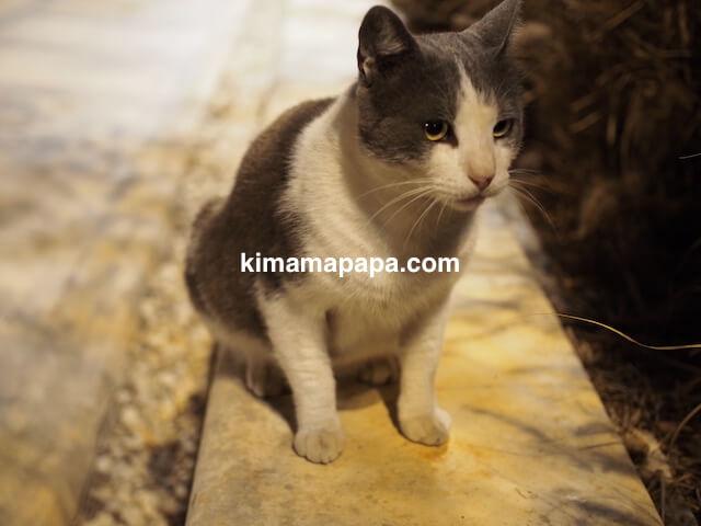 マルタ、ヴィットリオーザの猫