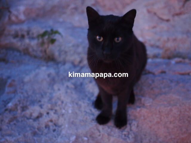 セントジュリアン、スピラーノ湾の猫
