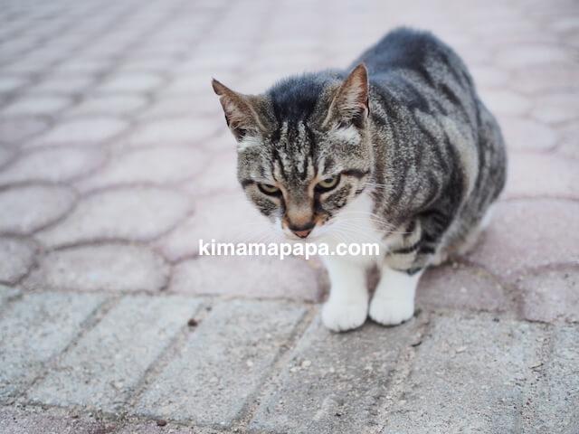 セントジュリアン、インディペンデンスガーデンの猫