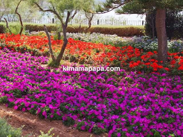 セントジュリアン、インディペンデンスガーデンの花