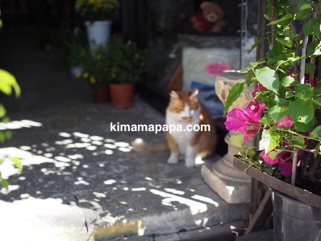 セントジュリアン、ペットショップの猫
