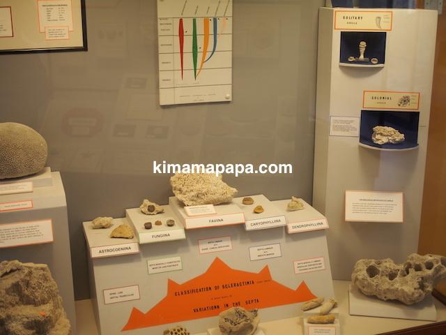イムディーナ、国立自然科学博物館のサンゴ