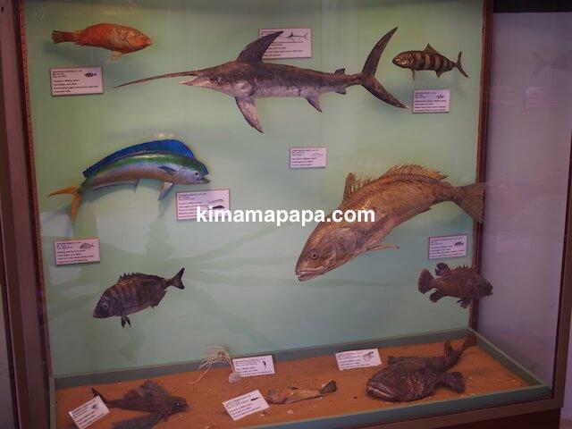 イムディーナ、国立自然科学博物館の魚