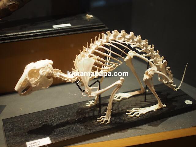イムディーナ、国立自然科学博物館のうさぎの骨