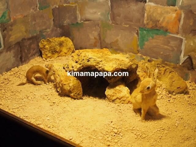 イムディーナ、国立自然科学博物館のうさぎ剥製
