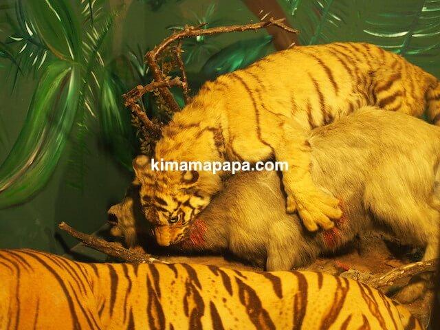 イムディーナ、国立自然科学博物館の虎の剥製